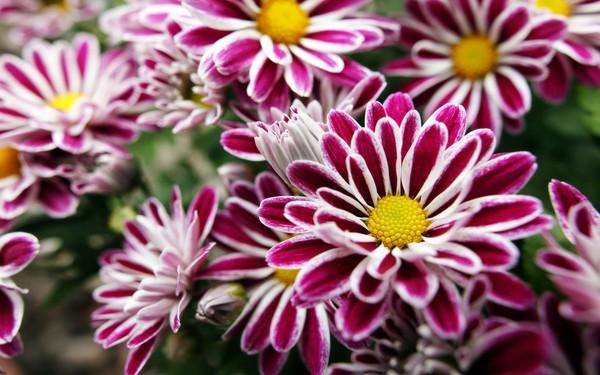 Кустарники цветущие осенью- фото с названиями, виды, описание, способы их применения в дизайне сада